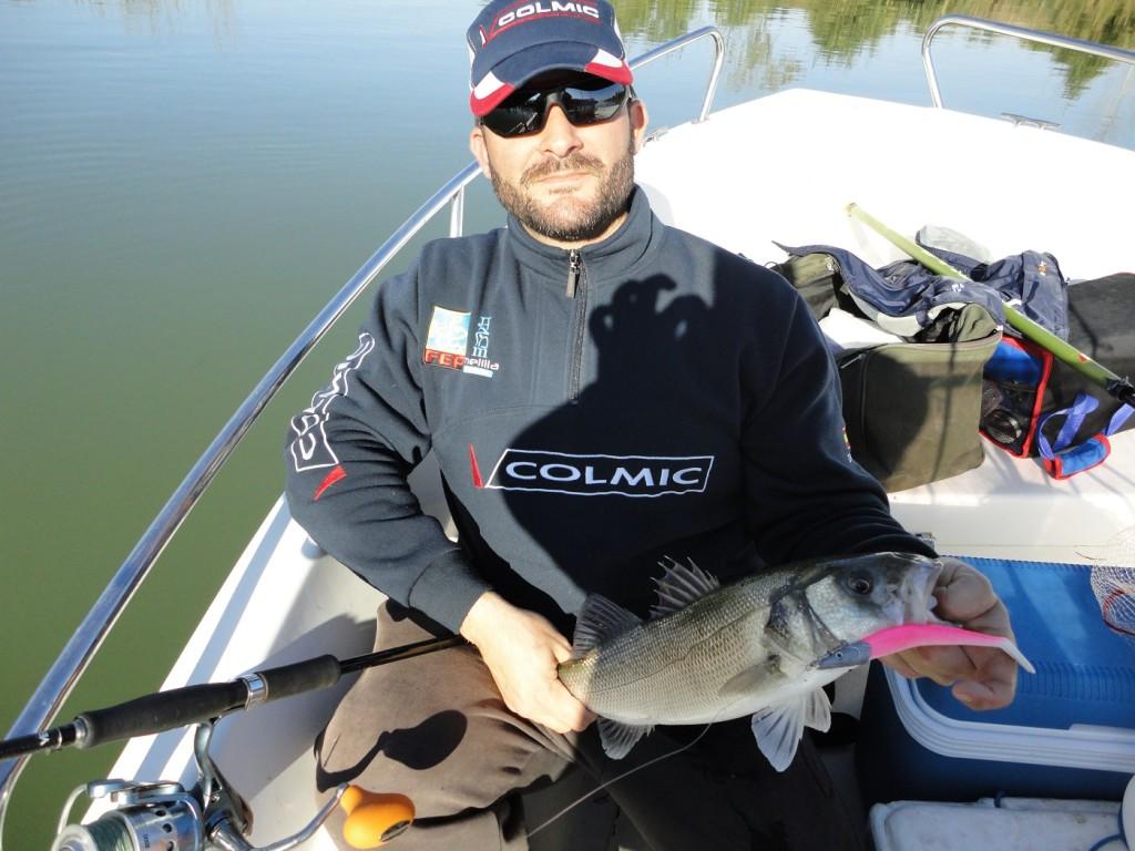 Lubina pescada a jigging con vinilo en el Delta del Ebro
