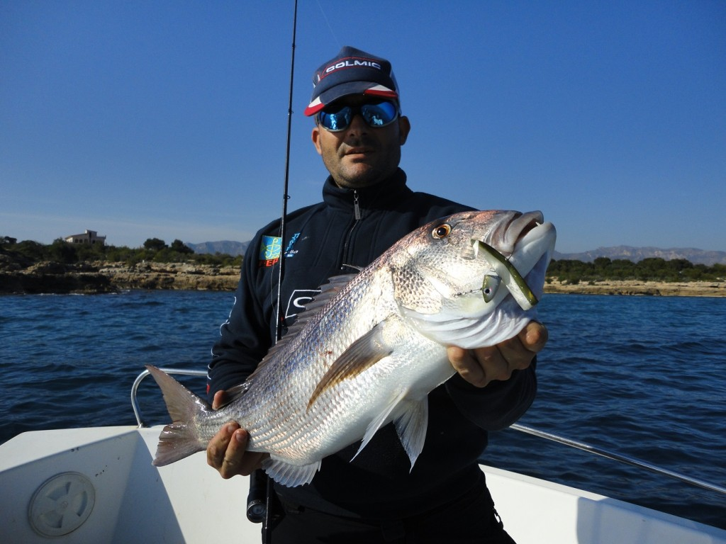 Dentón pescado con vinilo en el Delta del Ebro